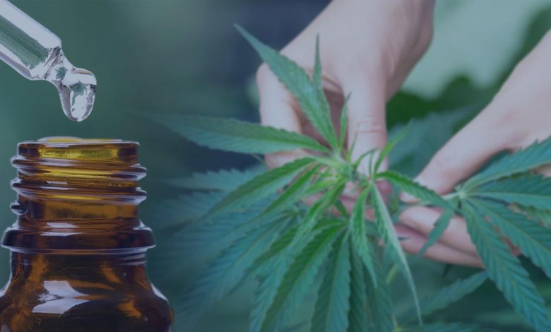 A comprehensive Guide On Cannabis Extraction Methods