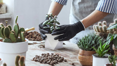 Photo of Avoid these mistakes while changing the pot of your Indoor plants.